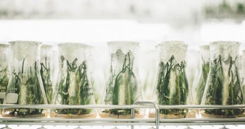 Nowe odmiany roślin. Jak je skutecznie chronić i komercjalizować?