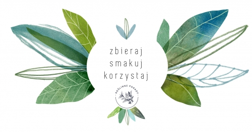 Jak nie zabić kaktusa? Czyli o pielęgnacji roślin | Wrocław