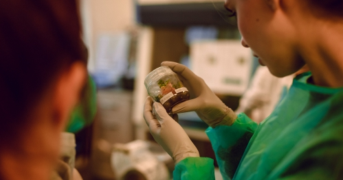 Oprowadzanie po pracowni hodowli roślin in vitro wraz z prelekcją
