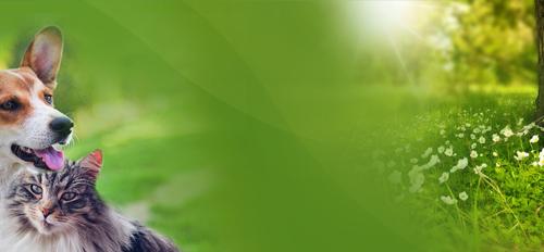 Kurs Animals - Uzdrawianie Zwierząt Theta Healing