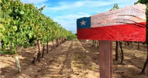 """Noc Wina: """"Kuchnia i Wina Chile""""   Tematyczna kolacja z degustacją win"""